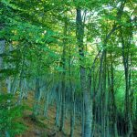 LE FAGGETE DEL PARCO RICONOSCIUTE DALL'UNESCO COME PATRIMONIO DELL'UMANITA'